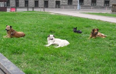 hunde in moskau