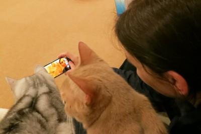 making-of: selfie mit katzen