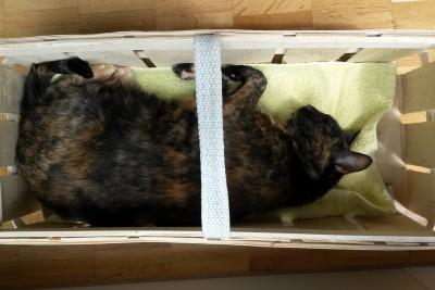 viereckige schlafposition