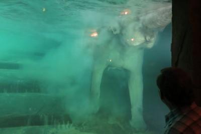 schwimmfant