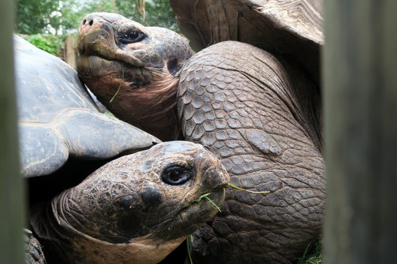 schildkrötentetris