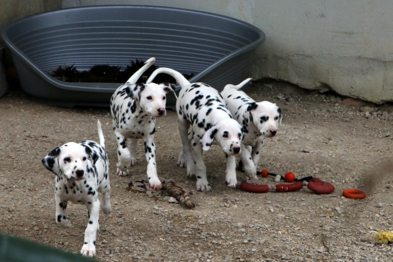bilderbuchhunde