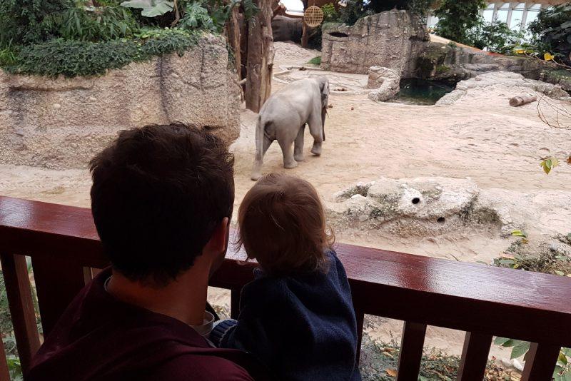 elefantentbesuch